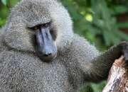 Safari tours from dar es salaam
