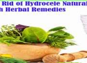 Buy Herbal Products for Hydrocele Online