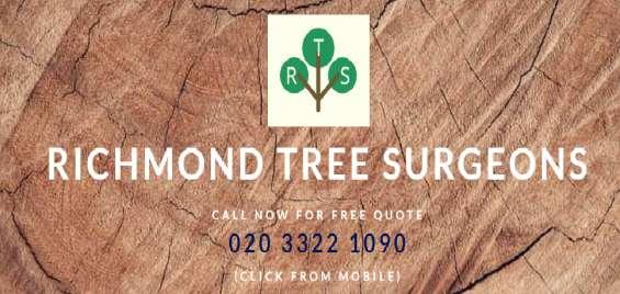 Richmond tree surgeon
